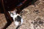 Кошечка 2,5 мес срочно ищет хороших хозяев!